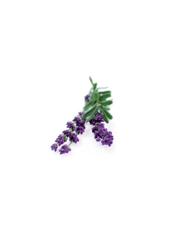 Click and Grow Smart Garden Refill 3-pack - Lavender